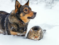 Dog and cat in snow. Dog and cat playing in the snow royalty free stock photos