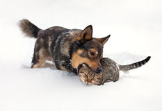 Dog and cat in snow. Dog and cat playing in the snow stock photo