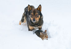 Dog and cat in snow. Dog and cat playing in the snow royalty free stock photo