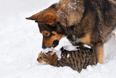 Dog and cat in snow. Dog and cat playing in the snow stock photography