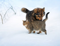 Dog and cat in snow. Dog and cat playing in the snow royalty free stock image