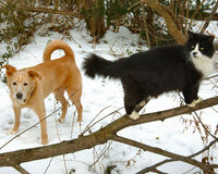 Dog and Cat in the Snow. Dog and cat in backyard snow Royalty Free Stock Photos