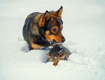 Dog and cat in the snow Stock Photo
