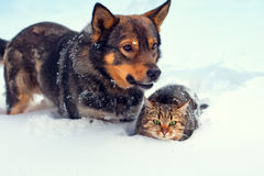 Dog and cat in snow Royalty Free Stock Image