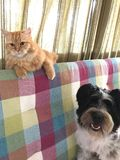 Dog and cat on the sofa. A pet dog and a cat on the sofa waiting for a selfie photograph stock photo