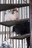 White cat and black dog on the steps of a spiral staircase. royalty free stock photos