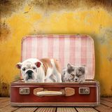 Dog and cat in suitcase. On yellow background royalty free stock photo