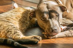 Dog and cat sunbathing Stock Images
