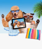 Dog with cat taking a selfie together with a smartphone Royalty Free Stock Images