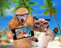Dog with cat taking a selfie together with a smartphone Stock Photos