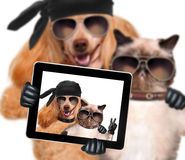 Dog with cat taking a selfie together with a tablet Royalty Free Stock Photo