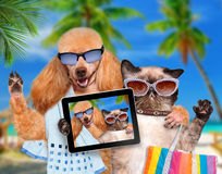 Dog with cat taking a selfie together with a tablet Stock Photos