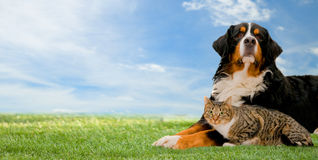 Dog and cat together. On grass, sunny spring day and blue sky. Panorama version Royalty Free Stock Photo