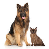 Dog and Cat together. In front of white background Royalty Free Stock Photo