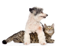 Dog and cat together. isolated on white background.  Royalty Free Stock Photo
