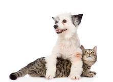 Dog and cat together. isolated on white background.  Royalty Free Stock Images