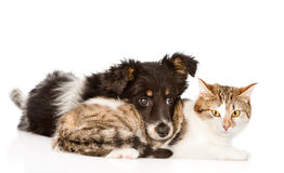 Dog with cat together. isolated on white background.  Royalty Free Stock Photos