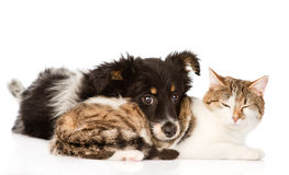 Dog with cat together. isolated on white background.  Royalty Free Stock Photography