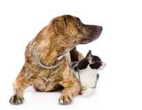 Dog and cat together looking away. isolated on white background.  Stock Photo