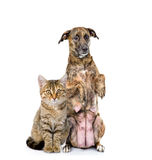 Dog and cat together. looking at camera. isolated Stock Image