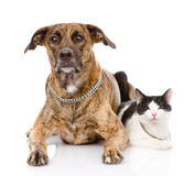 Dog and cat together looking at camera. isolated on white backgr Stock Photos
