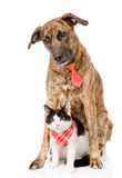 Dog and cat together. looking at camera. isolated on white. Background Royalty Free Stock Images