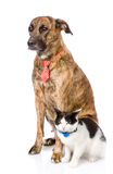 Dog and cat together. looking at camera.  on white backg. Round Royalty Free Stock Image
