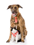 Dog and cat together. looking at camera.  on white. Background Royalty Free Stock Photo