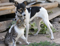 Dog and cat together. Outdoor vv Royalty Free Stock Image