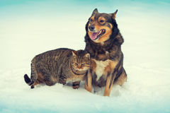 Dog and cat together in snow. Big dog and cat sitting together in snow Stock Images