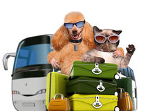 Dog and cat traveler Royalty Free Stock Images