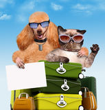 Dog and cat traveler Stock Photo