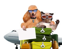 Dog and cat traveler. Stock Photo