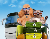 Dog and cat traveler. Royalty Free Stock Photos