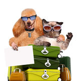 Dog with a cat travelers. Royalty Free Stock Photos