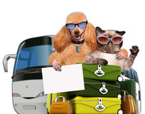 Dog with a cat travelers. Royalty Free Stock Images