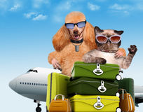 Dog with cat travelers. Royalty Free Stock Images