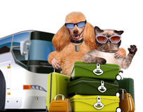 Dog with cat travelers. Stock Photos