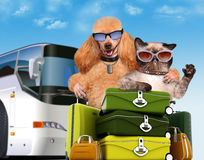 Dog with a cat travelers. Stock Images