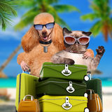 Dog with cat travelers. Royalty Free Stock Image