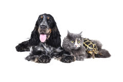 Dog cat and turtle Stock Photos