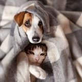 Dog and cat under a plaid. Pet warms under a blanket in cold autumn weather stock photography