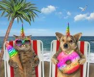 Dog and cat unicorns eating on loungers royalty free stock image