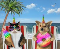 Dog and cat unicorns eating on loungers 2 royalty free stock photos