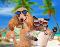 Dog with a cat on vacation. Stock Image