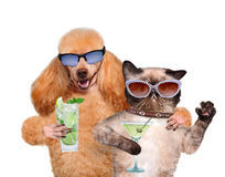 Dog with a cat on vacation. Stock Images