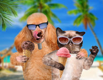 Dog with a cat on vacation. Royalty Free Stock Photos
