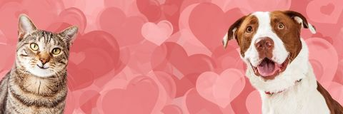 Dog and Cat Valentine Hearts Web Banner stock photo