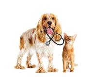 Dog and cat veterinarian Stock Photo