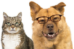 Dog and cat wearing glasses. Dog and cat on white background wearing glasses royalty free stock photos